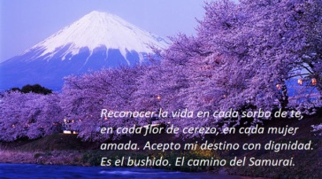 live-japan-mount-fuji-cherry-blossoms-snow-capped-evening1
